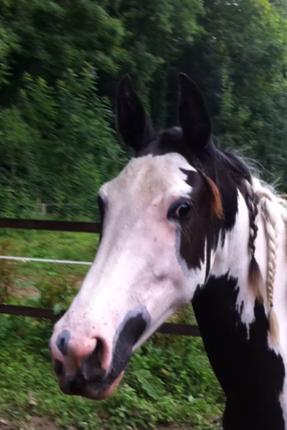 """""""L'équitation c'est comme l'amour: Il faut être deux et êtres d'accord."""""""