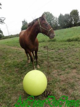 Séance avec Le Ballon !!!
