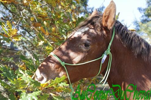 Séance Photo du 13/11/2011