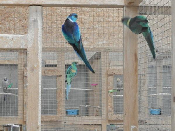 barnard bleu