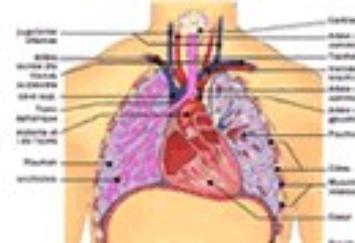 Cancer du poumon :ne laissez pas votre vie partir en fumée !