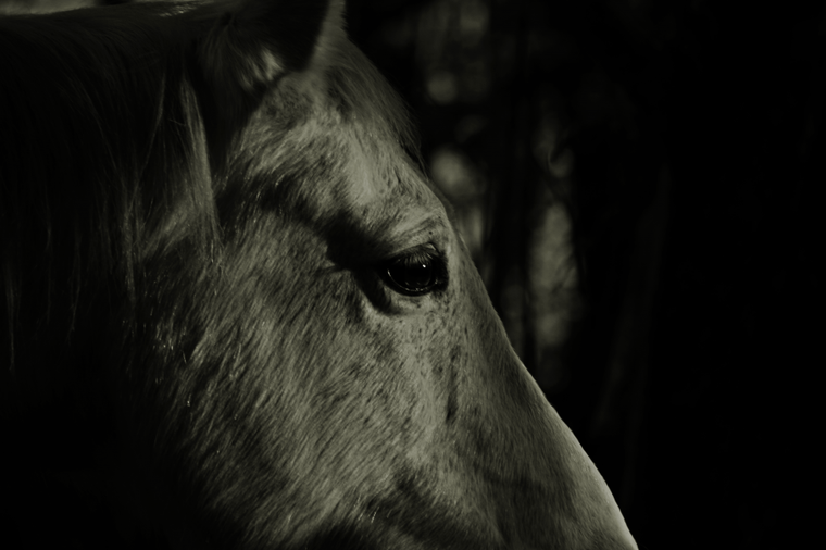 « Je vois parfois dans le regard d'un cheval la beauté inhumaine d'un monde d'avant le passage des hommes. »
