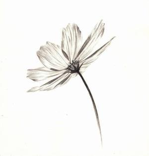 (442) - High Flower