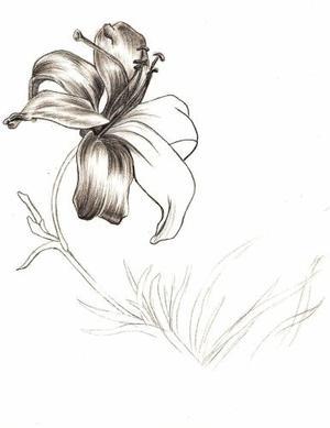 (444) - L'Orchidée Zygomorphique