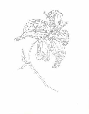 (453) - L'orchidée Zygomorphique