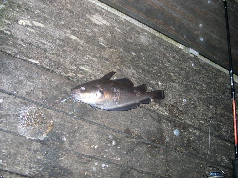 La pêche à la gode: