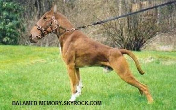 HUMOUR DE LA SEMAINE : chien-cheval