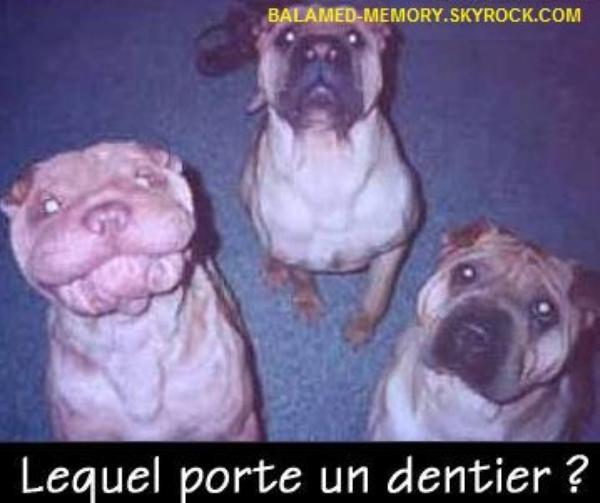 HUMOUR DE LA SEMAINE : Dentier pour chiens
