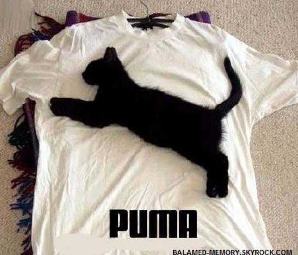 HUMOUR DE LA SEMAINE : Puma chat