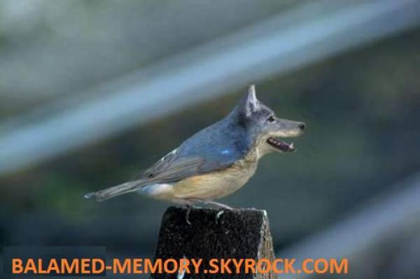 HUMOUR DE LA SEMAINE : Oiseau chien 2