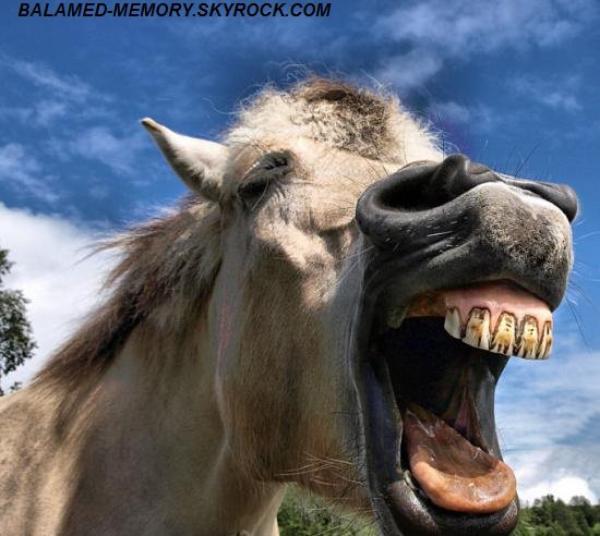 HUMOUR DE LA SEMAINE : Les chevaux ne se lavent pas les dents