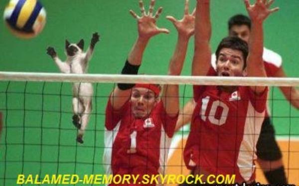 HUMOUR DE LA SEMAINE : Chat au volleyball