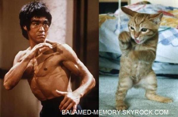HUMOUR DE LA SEMAINE : Karaté kitty