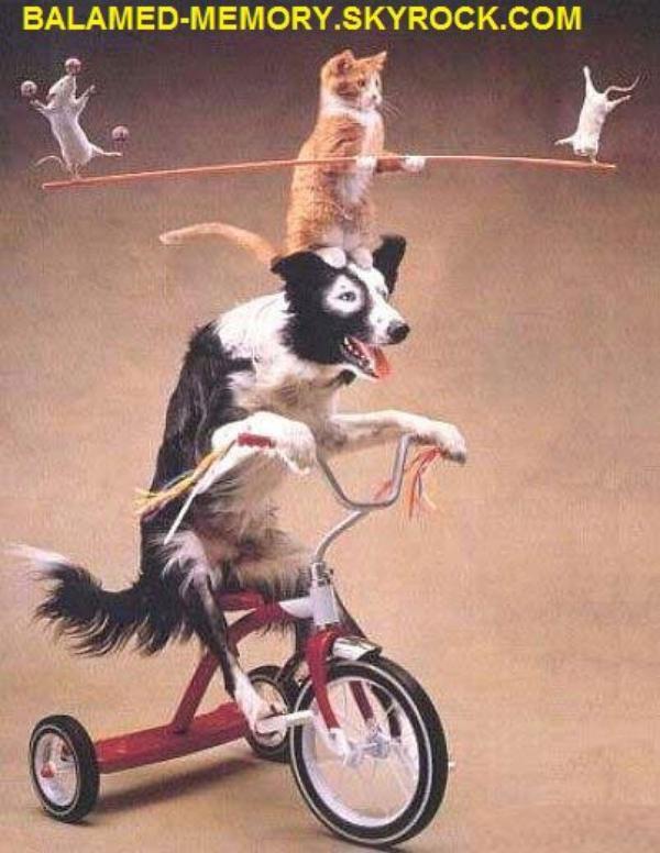 HUMOUR DE LA SEMAINE : Le cirque des animaux