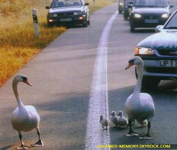 HUMOUR : Les signes sur autoroute