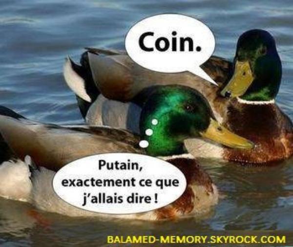 HUMOUR : Discussion de canards