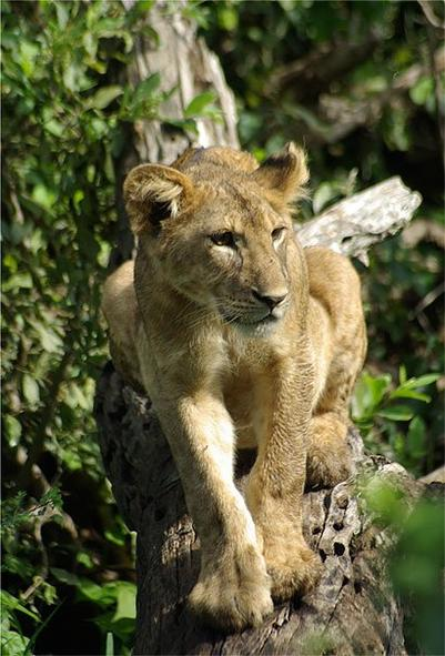 mon ptit leon qui a grandit ^^