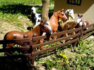 Des chevaux bien installés !