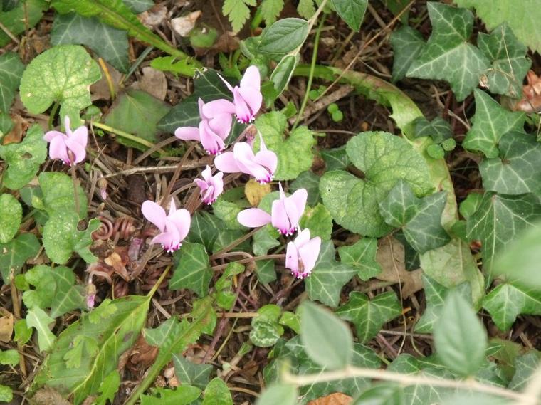 Les Fleurs de l automne