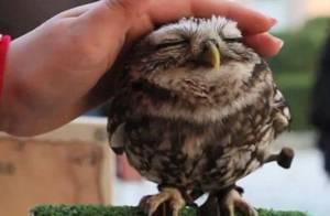 Hors sujet de janvier : Des animaux so cute !