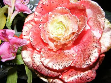 Série fleurs