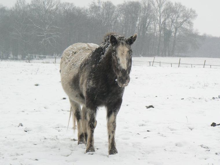 Neige à la Cense!!!!!!!!!!!!!   (suite....)