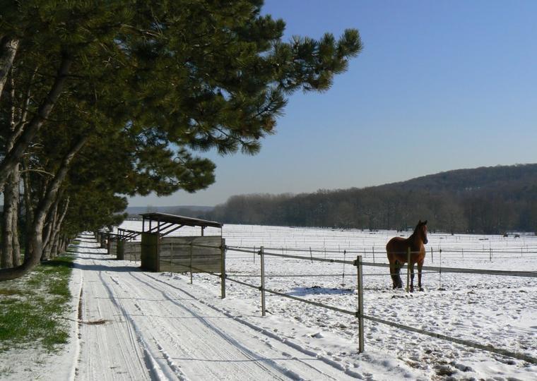 Sonny et Sultan vous emmènent en promenade dans la neige au Haras de La Cense!