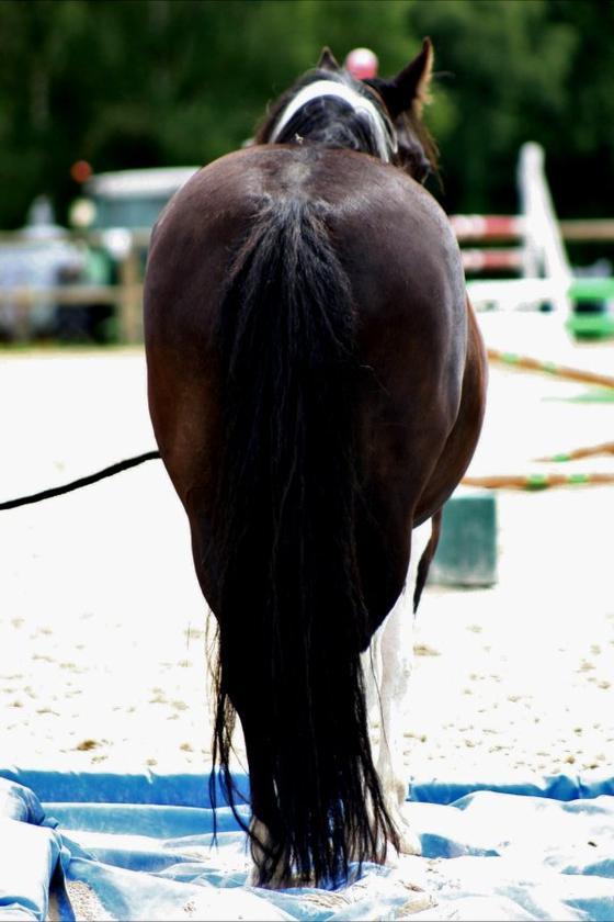 Sultan photographié par Coraline Paquet, août 2012.
