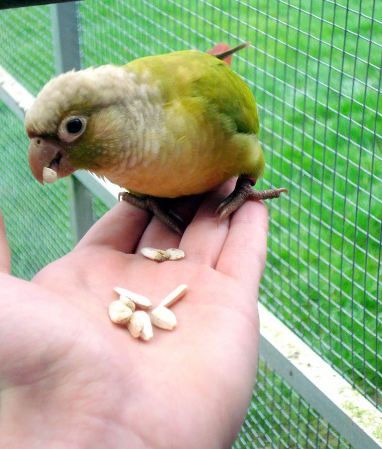 Kiwi la mascotte !!