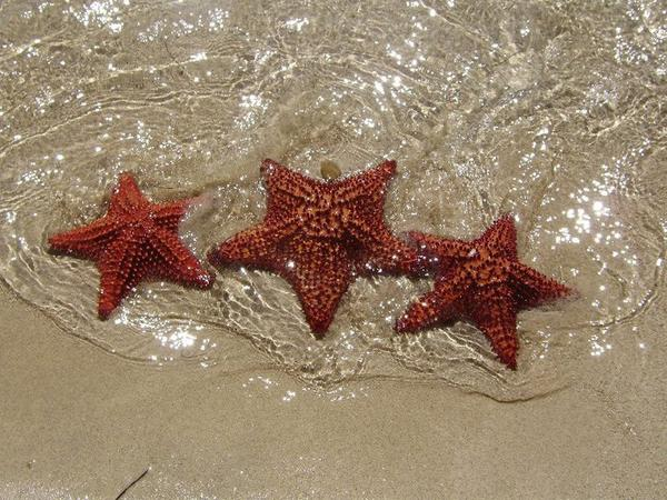 Nos étoile ^^