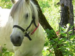 Mes amours de chevaux,ce sont les plus beaux ! ♥