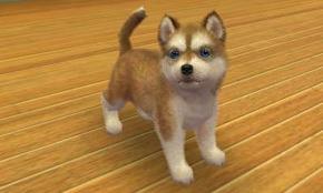 [N+C] Mon premier chien.
