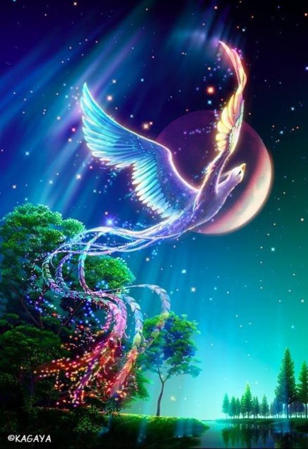 vol mon jolie oiseau