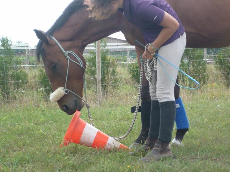 ...L'homme de cheval aime ses chevaux plus que l'équitation ...