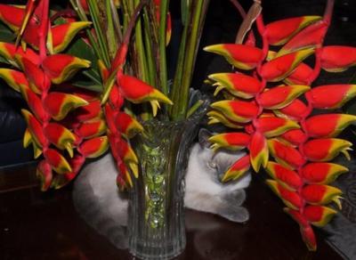 un petit chat tropical  sous les bec de perroquet