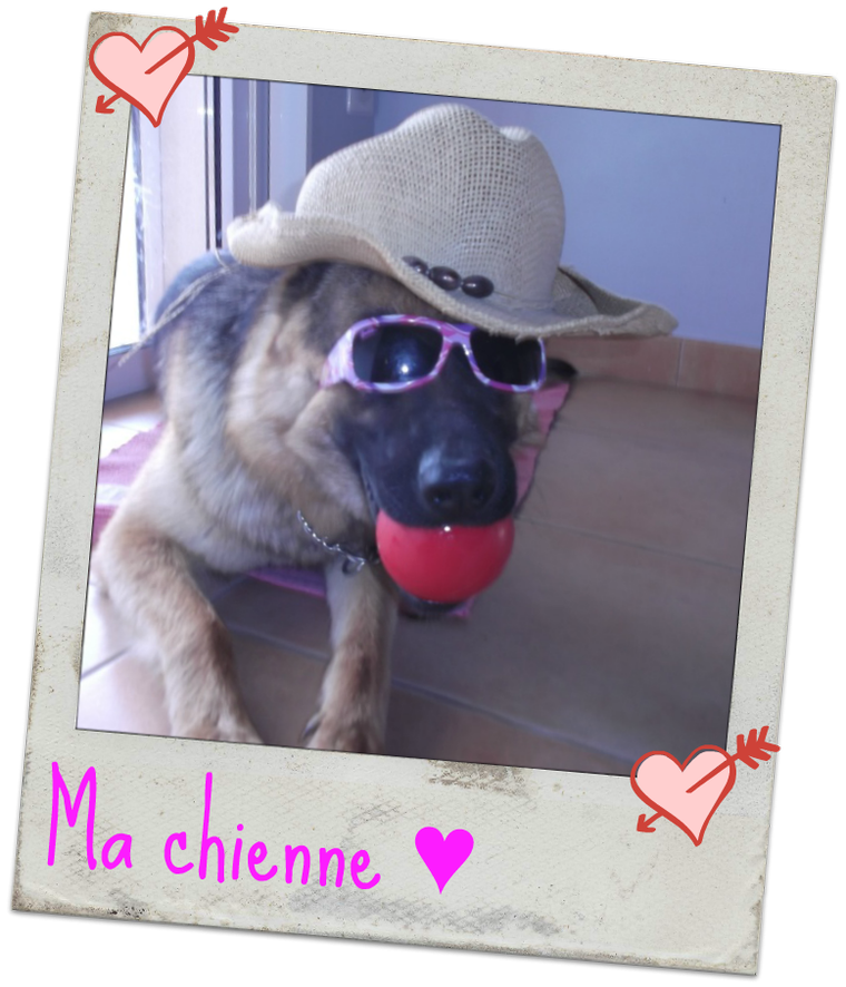 Ma chienne