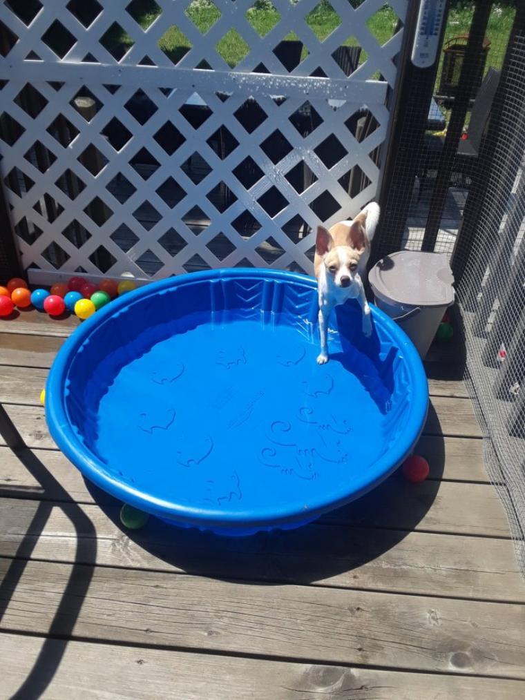 Nelson aussi à droit de se baigner dans sa piscine