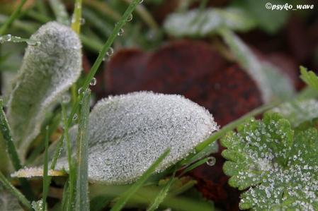Les débuts de l'hiver