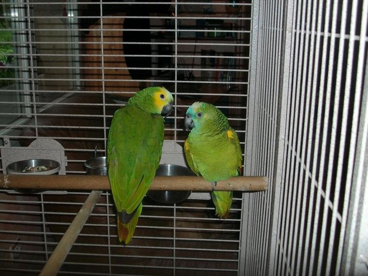 popeye et coco