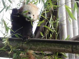 Le zoo : Un loisir ou une prison ?