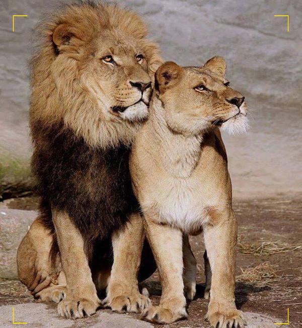 We are Leo's ... ?____?