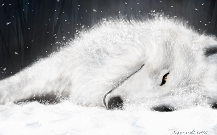 Le loup solitaire .