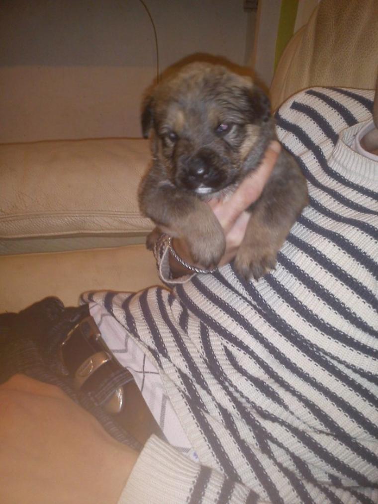 Notre nouveau petit chien Gorky