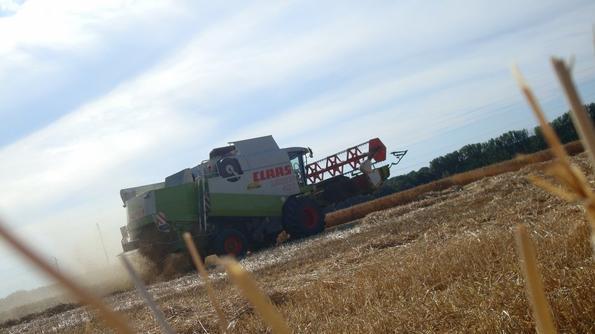Moisson de blé ( 2ème partie) le Dimanche 3 Juillet 2011 ...