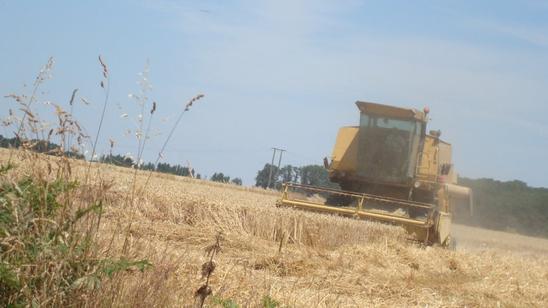 Moisson de Blé le Lundi 4 Juillet 2011 ...
