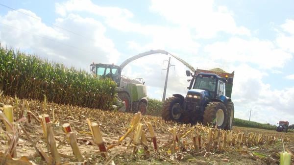 Ensilage de maiis le Lundi 5 septembre 2011 ...