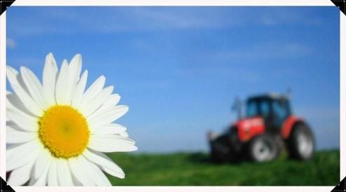 Fauchage le Lundi 14 Mai 2012 (MF & FORD) ....