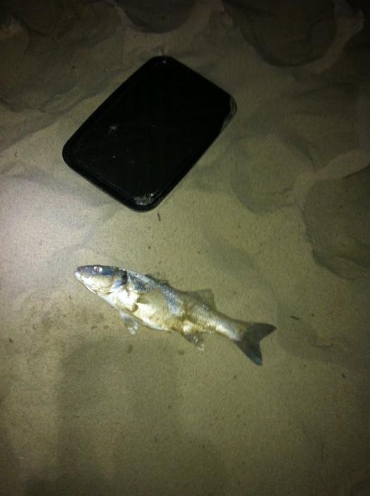 Pêche de nuit en surfcasting plage du Touquet Août 2012