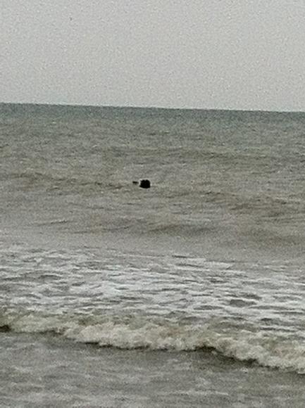 Un compagnon au bord de l'eau