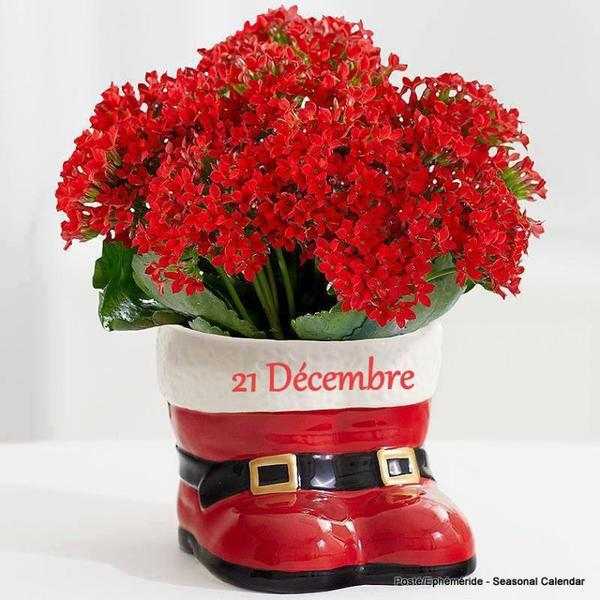 bonjour mes amis(e)s.. je vous souhaite un bon appétit .. et un bel après midi de mercredi, 1er jour de l'hiver, ici toujours la pluie !!! .. bisous Josie